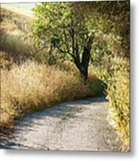 We Will Walk This Path Together Metal Print
