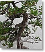 Weathered Bonsai Metal Print