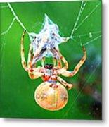 Weaving Orb Spider Metal Print