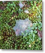 Web In Moss Metal Print