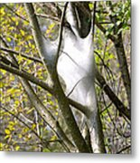 Webbed Branches Metal Print