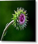 Webbed Thistle Metal Print