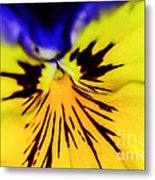 Wee Kiss Of The Sun Metal Print