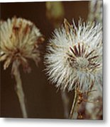 Weed Travel The World Metal Print
