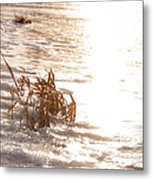 Weeds On Ice Metal Print