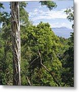 Weeping Fig And Host Natu Tree Sulawesi Metal Print
