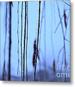 Weeping Forest Frost Metal Print