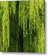 Weeping Willow Tree Enchantment  Metal Print