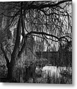 Weeping Willow Tree Metal Print