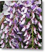 Weeping Wisteria - Spring Snow - Ice - Lavender - Flora Metal Print