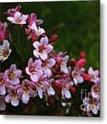 Weigela Branch Metal Print