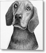 Weiner Dog Metal Print by Lorraine Foster