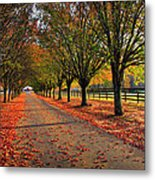 Welcome Home Bradford Pear Lined Drive-way Metal Print