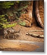 Welcome Home - Sequoia National Forest Metal Print