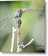 Welcome To My World Dragonfly Metal Print