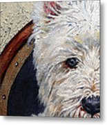 West Highland Terrier Dog Portrait Metal Print