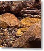 Western Diamondback Rattlesnake 2 Metal Print