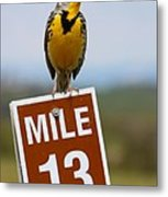Western Meadowlark On The Mile 13 Sign Metal Print