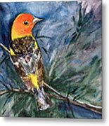 Western Tanager At Mt. Falcon Park Metal Print