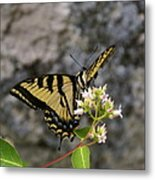 Western Tiger Swallowtail Butterfly 2 Metal Print