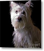Westie Drama Metal Print by Edward Fielding