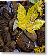 Wet Autumn Leaf On Stones Metal Print