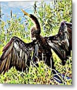 Wet Feathers Metal Print