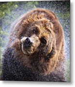 Wet Griz Metal Print by Steve McKinzie