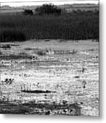 Wet Landscape Metal Print