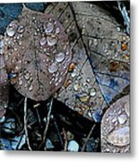 Wet Leaves Metal Print by Artist and Photographer Laura Wrede