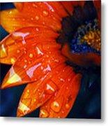 Wet Petals Metal Print