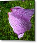 Wet Rose Of Sharon 2 Metal Print