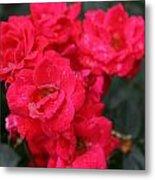 Wet Roses Metal Print