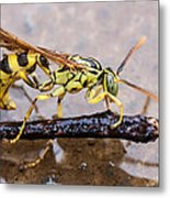 Wet Wasp Metal Print