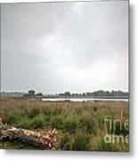 Wetland 1 Metal Print