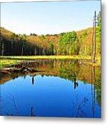 Wetland Morning Calm Metal Print