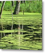 Wetland Reflection Metal Print