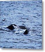 Whale 2 Metal Print