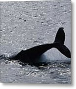 Whale Bw Metal Print by Lorena Mahoney