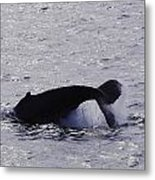 Whale Bw2 Metal Print by Lorena Mahoney
