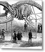 Whale Skeleton, 1866 Metal Print