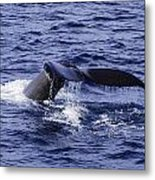 Whale Tail 2 Metal Print by Lorena Mahoney