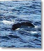 Whale Tail 3 Metal Print