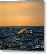 Whale Tail In The Sun Metal Print