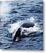 Whales Family Metal Print
