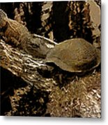 What A Crock - Featured In Wildlife Group Metal Print
