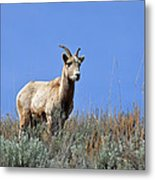 What Are Ewe You Looking At? Metal Print