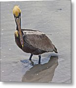 What Are You Lookin At Metal Print