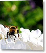 What Are You Looking At Metal Print