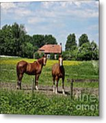 What Are You Staring At?				 Metal Print